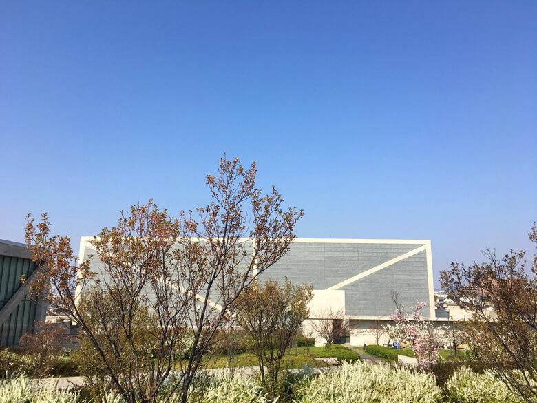 博物館のまわりにも、桜咲いてるポーン☆