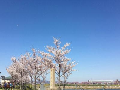 桜と名勝狭山池