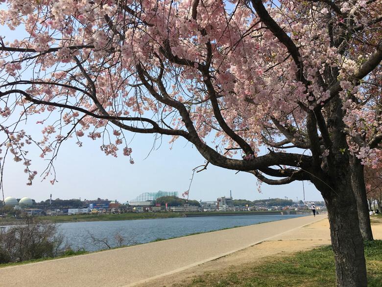 桜キレイだポ~ン☆