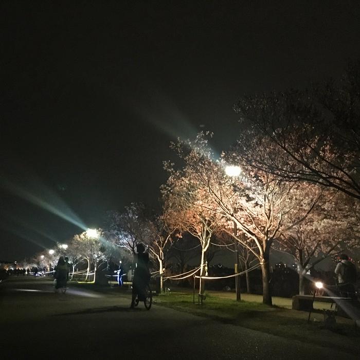2018春夜桜ライトアップ最終日