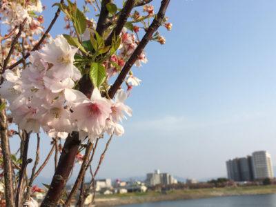 花見と狭山池