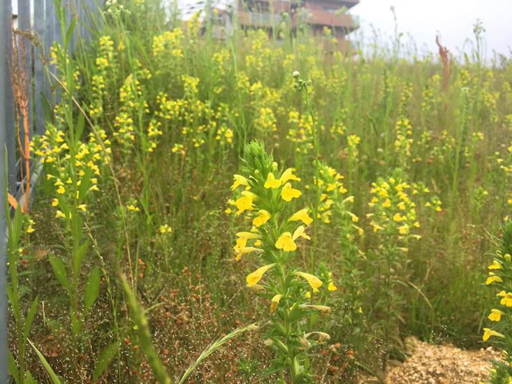 黄色い花みっけだポン☆