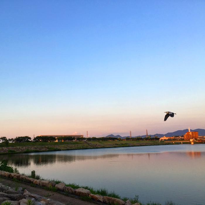 狭山池の夕日とサギ
