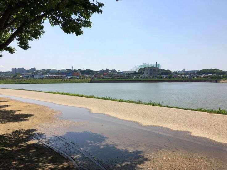 昨日の雨の水たまりがポン☆