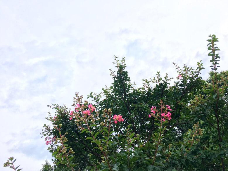 バタフライガーデンにサルスベリの花☆咲いてきたポン☆