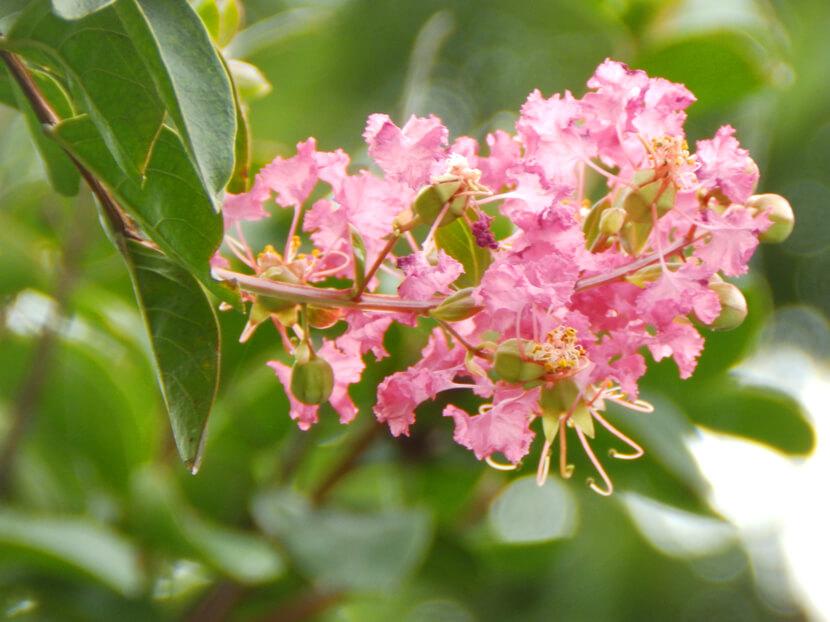 かわいい花だポン☆