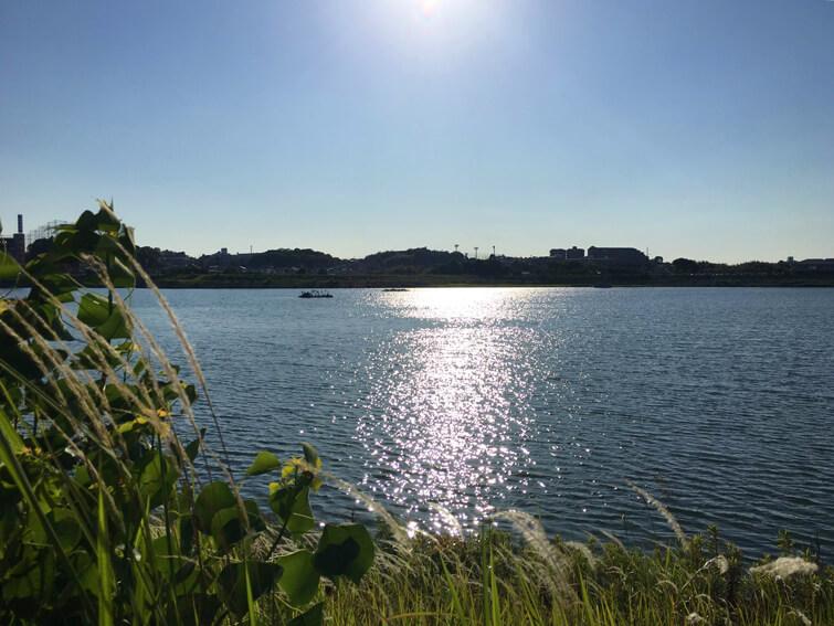 太陽ピカーン☆ 狭山池キラキラまぶしいポンよ~♪