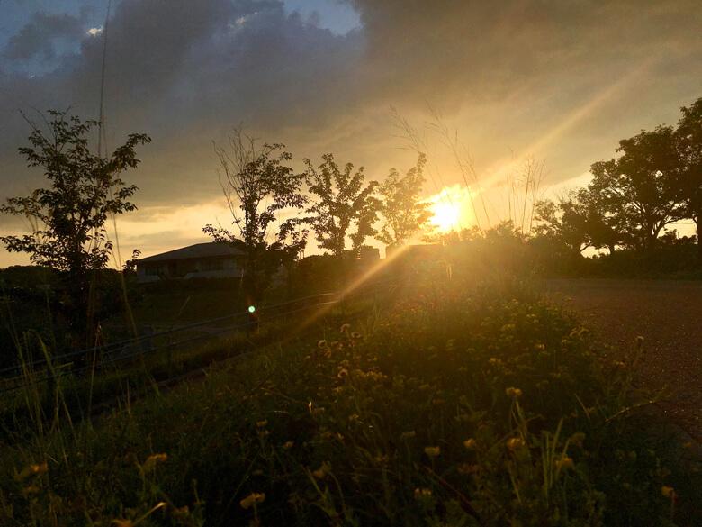ミヤコグサと夕日がポン☆