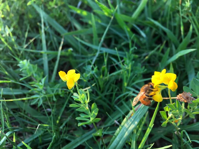 ハチがブンブンブン♪ 忙しそうに飛びまわってるポンよ〜☆