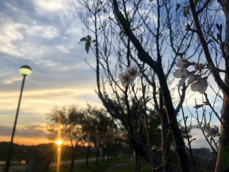 夕日と桜がポン☆