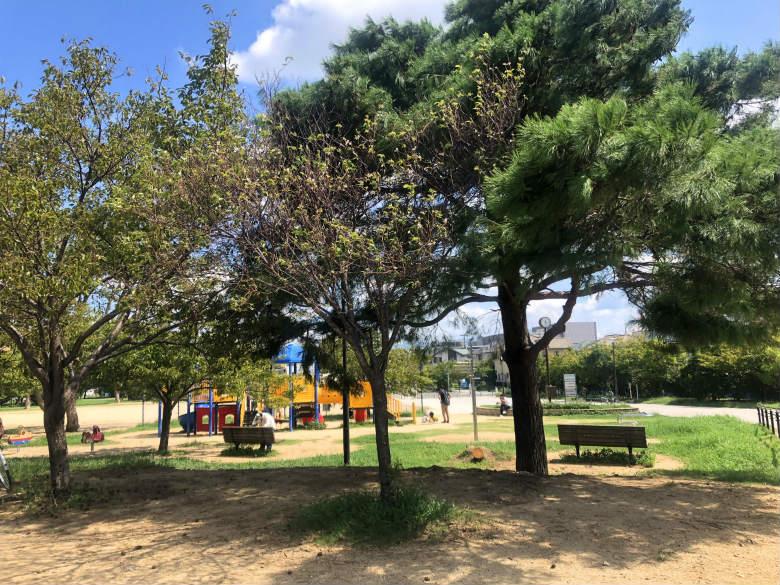 さやか公園の横、ちっちゃい桜咲いてるポーン☆