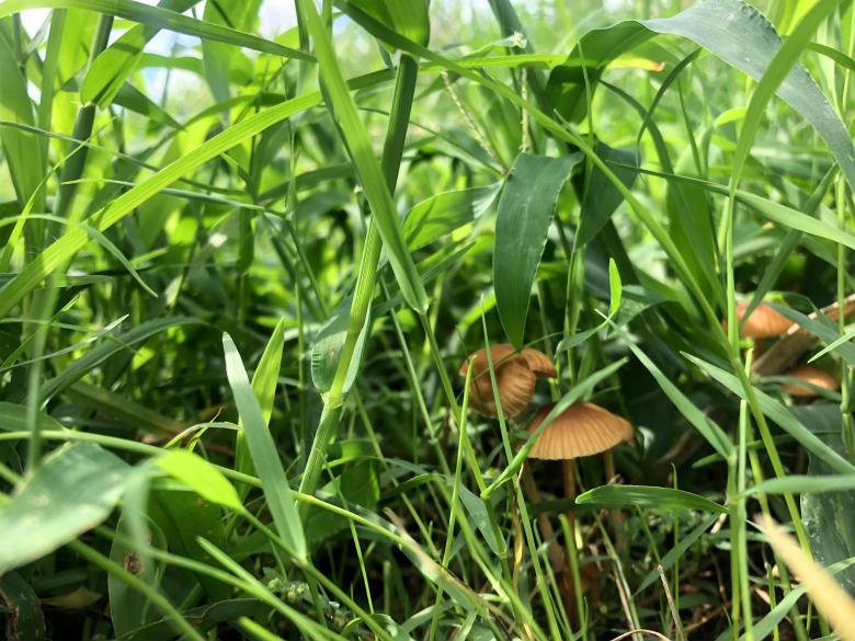 草の中から、キノコ見っけだポン♪