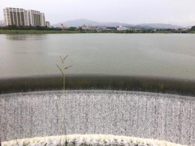 西除洪水吐、水ゴーゴー流れてるポン