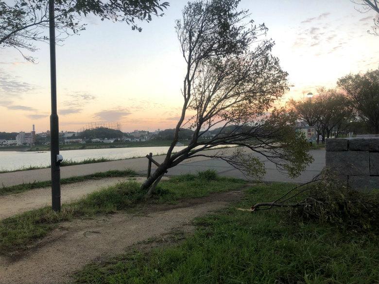 昨日の台風で、木が折れてるポン☆