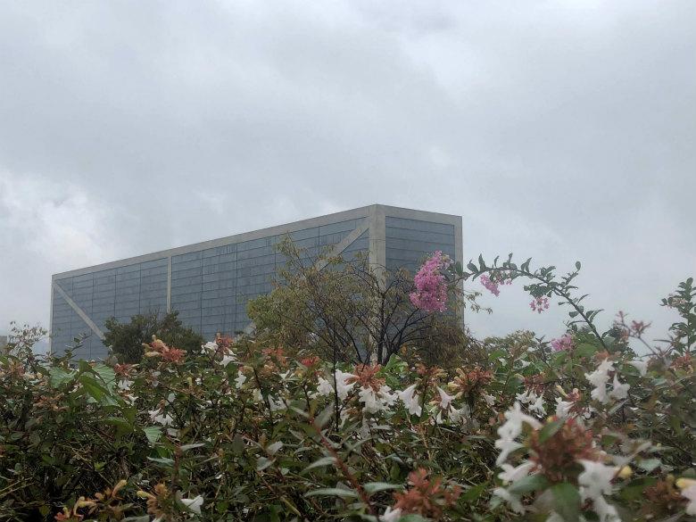 ピンクのサルスベリの花とアベリアの花がポンポン☆