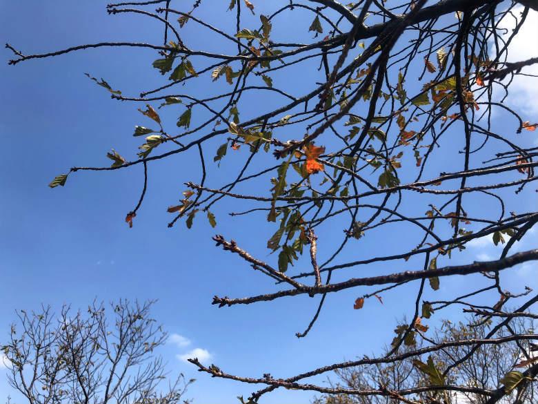 オレンジ色の葉っぱ見っけだポン☆
