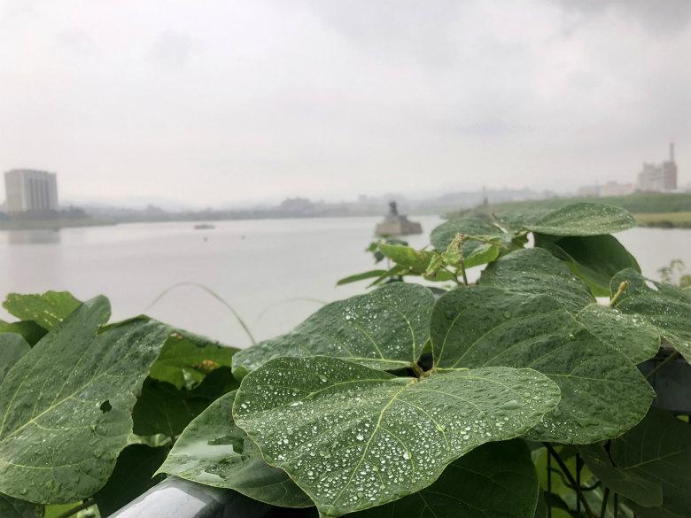 雨のしずく☆つぶつぶいっぱいだポンよ〜☆