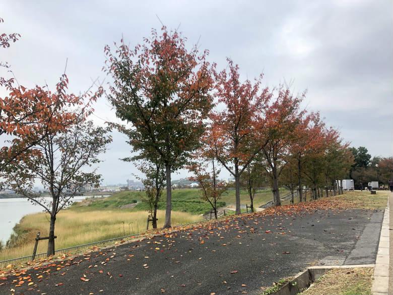 秋色葉っぱ☆、ヒラヒラ〜だポン☆