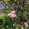 春の花が咲き始めたポン【2018年2月23日(金曜日)の狭山池】
