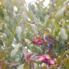 サザンカの花にメジロがポン【2018年2月25日(日曜日)の狭山池】