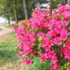 春の花が小さくポン【2018年4月14日(土曜日)の狭山池】