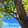 梅雨明けの青い空とセミの抜け殻がポン【2018年7月9日(月曜日)の狭山池】