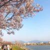 桜にメジロ・ツグミ・ヒバリ・ツバメもポン