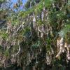 狭山池の豆とツバメがポン【2017年5月26日(金曜日)の狭山池】